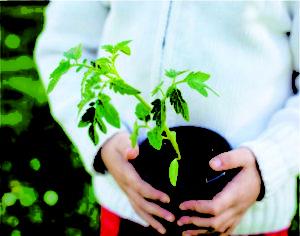 Cultivo de Mudas